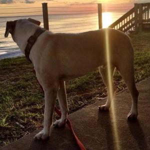 Oscar at the Beach
