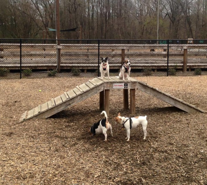 Penelope at dog park
