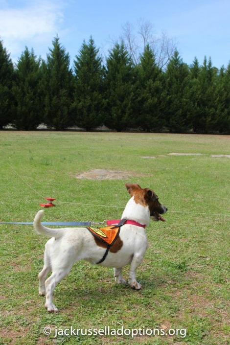 Penny ... wide open spaces ... Let me RUN!