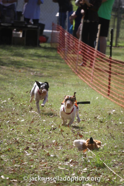 To our knowledge, neither Penny nor Sparky have ever participated in structured races ... but you would have never known!