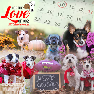 For the Love of Dogs Calendar Contest