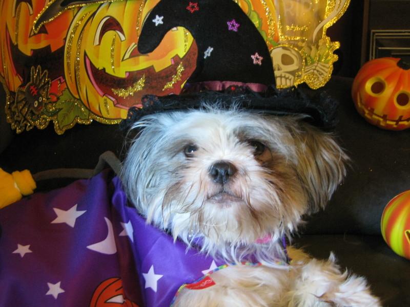 Happy Halloween from Cleo