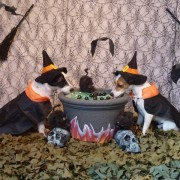 Witch Milly and Witch Milo