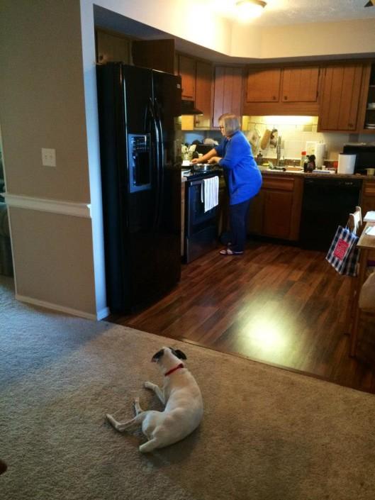 Rocky watching Grandma cook