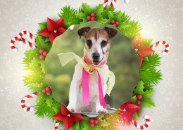 Angel Tree Sadie