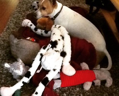 Sasha at Christmas