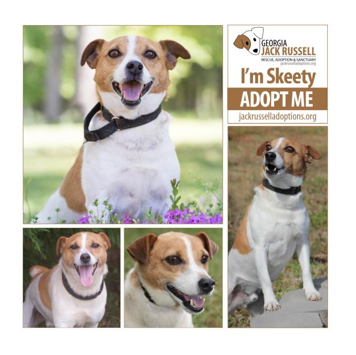 Adopt Skeety