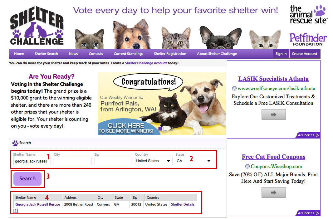 Vote for Georgia Jack Russell in the Shelter Challenge