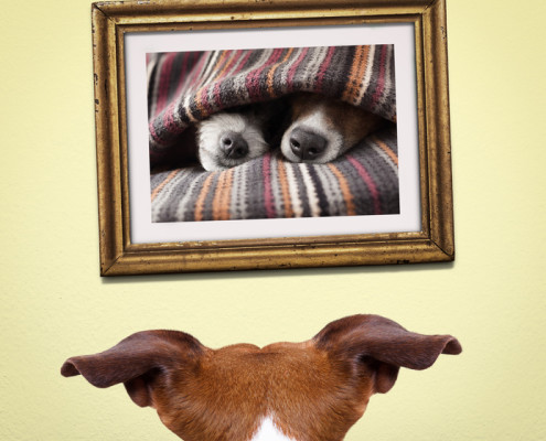 Jack Russell artists