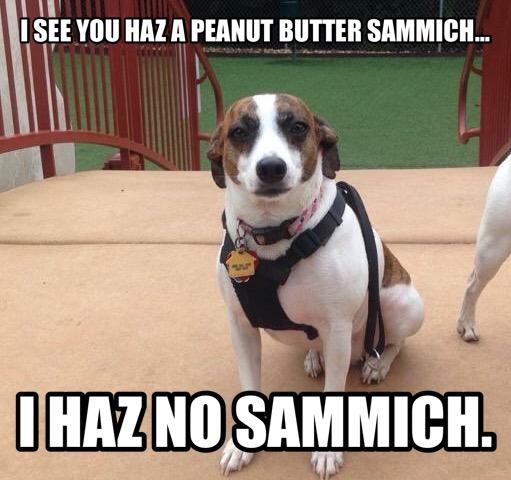 Susie's peanut butter meme