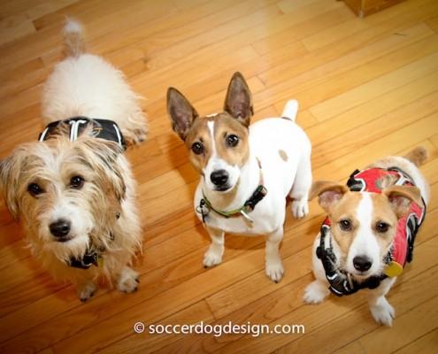 Benny, Brigit, Brodie