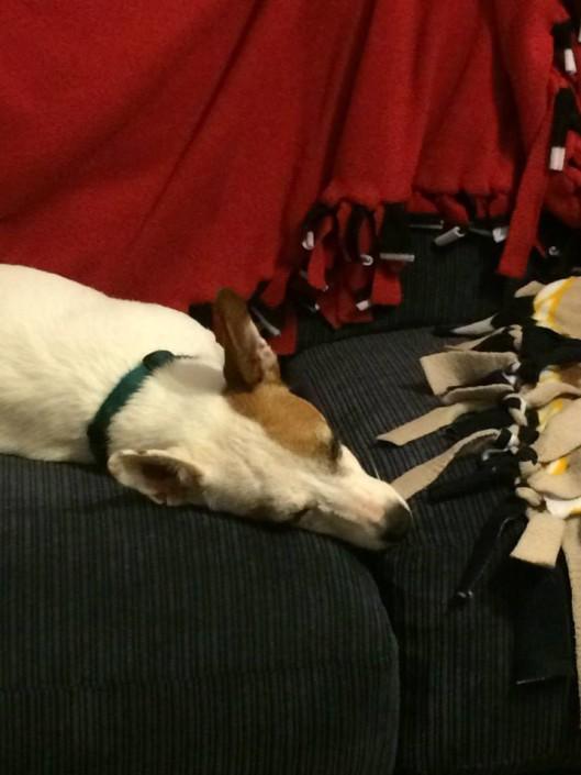 Xena ... sleeping?!
