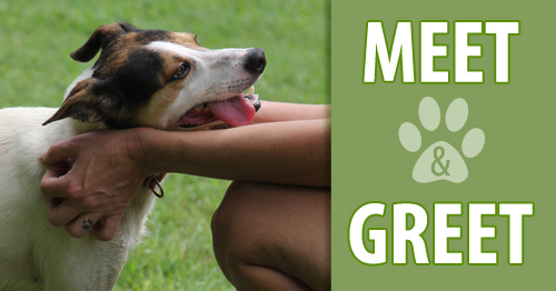 Georgia jack russell rescue adoption and sanctuary upcoming meet and greet m4hsunfo